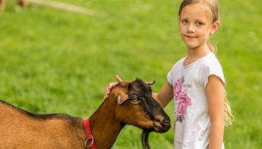Na kozí farmě